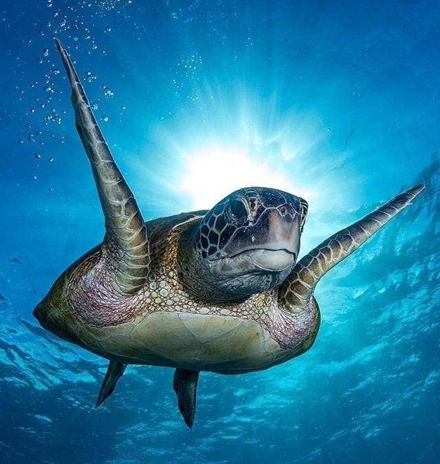 2019/2020 Bundaberg Turtle Season